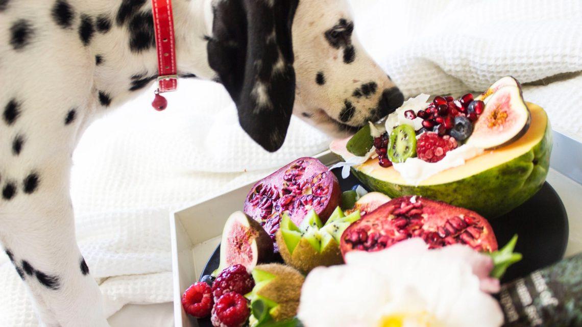 Les apports nutritifs de l'alimentation d'un chien sans croquette