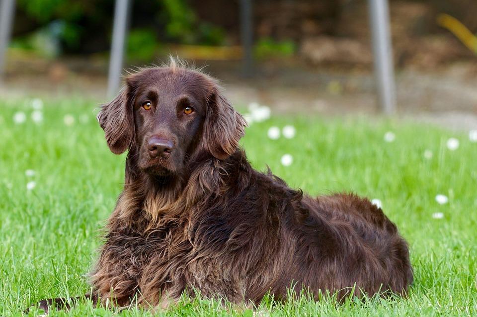 Un chien qui tourne en rond sans arrêt : est-ce inquiétant ?