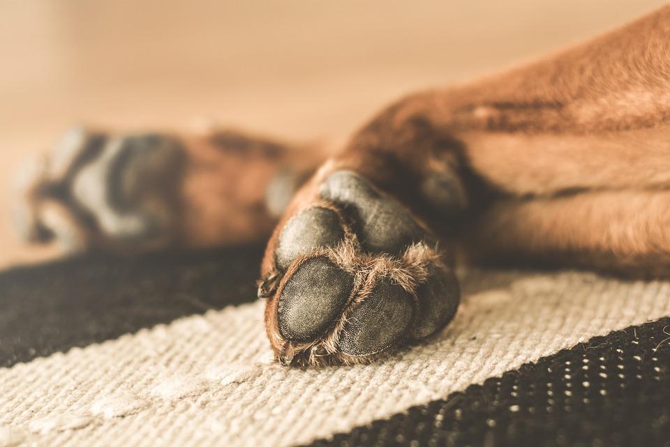 Tour d'horizon sur l'entretien des pattes et des ongles du chien