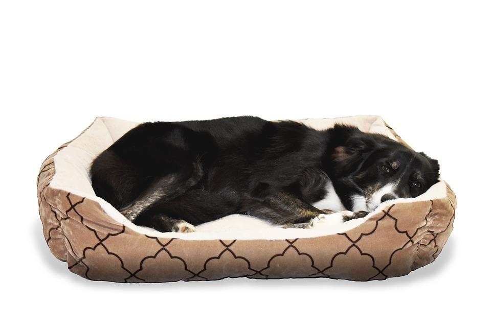 Choisir la couchette pour chien idéale : les points de repère