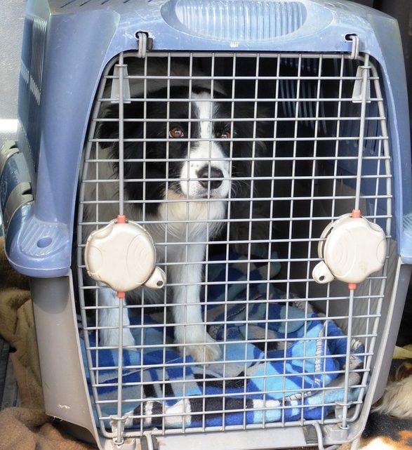 Voyage avec son toutou : quelle caisse de transport pour chien ?