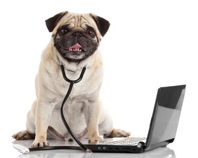 Taille, matière, efficacité : choisir un collier anti-puces pour chien