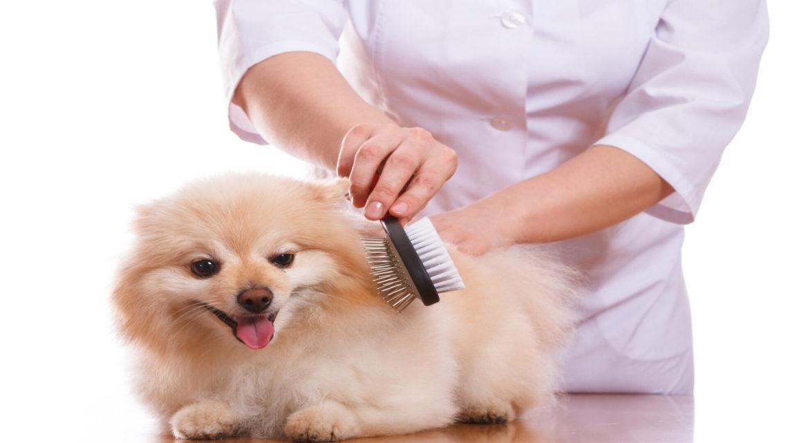 Bien-être canin : tout savoir sur le brossage du chien