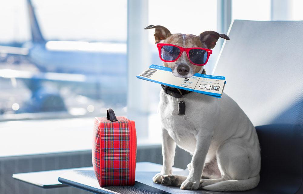 Les règles pour voyager en avion avec son chien