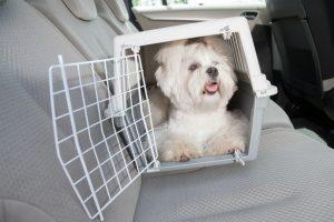 Quelles sont les causes du mal des transports chez le chien
