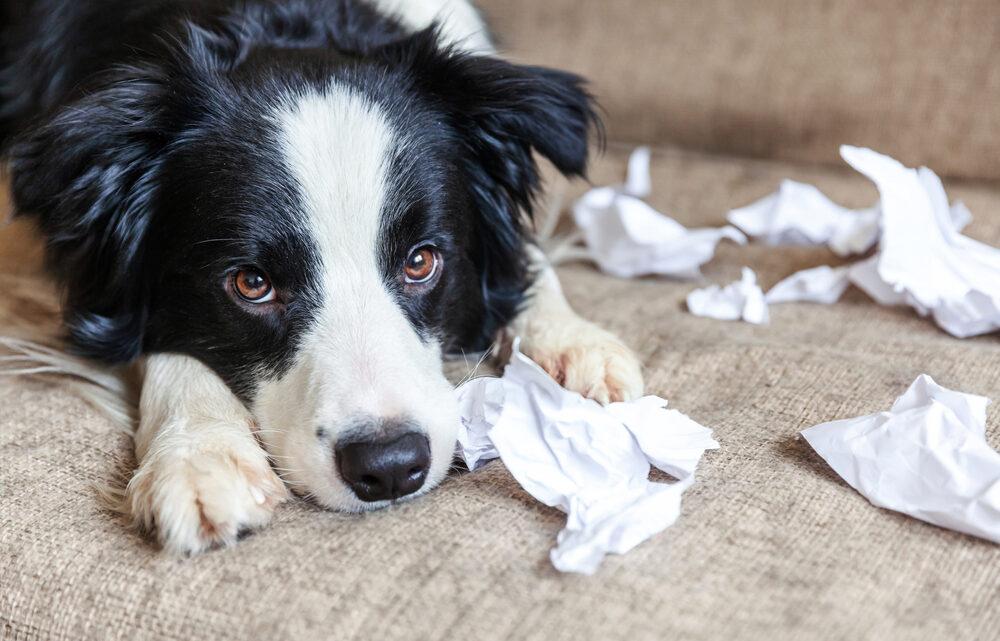 Des conseils pratiques pour bien comprendre votre chien